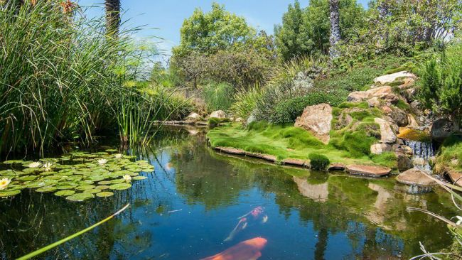 Fish Pond in Seamaire House of Oprah Winfrey